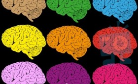 colorful-brain-10035081